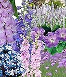 Dehner Pflanzenpaket Prachtstauden, 12er Set, rosa/lila/blaue Blüten, 10-30 cm, Staude