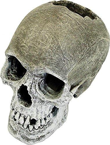 Rosewood-Life-Like-Human-Skull-Aquarium-Decor