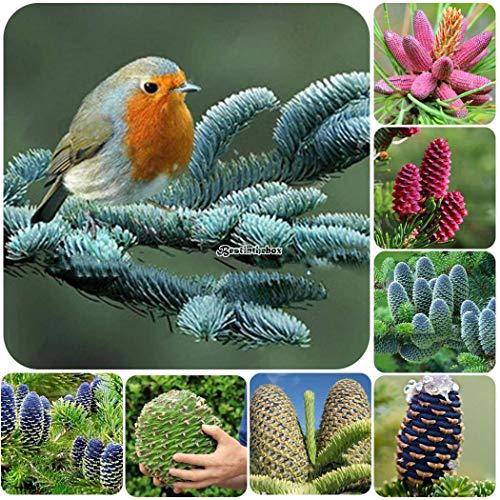 Go Garden Type16 Ma C Dicaments Et La Valeur A C Conomique Usine Sud Cora C Enne De Sapin Graines B98b
