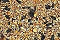 25kg Mecklenburger Landkörnerfutter - GVO frei von Futtermittel Kuhnwald GmbH - Du und dein Garten