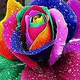 200 pcs Colorful Rainbow Rose Flower Seeds Petal Plants Home Garden Yard Decor