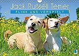 Jack Russell Terrier: flink und verspielt (Wandkalender 2019 DIN A4 quer): Jack Russell Terrier: Fröhliche und intelligente Begleiter (Monatskalender, 14 Seiten ) (CALVENDO Tiere)