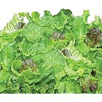 Kit de capsules de graines de salades vertes traditionnelles (9 capsules) Miracle-Gro AeroGarden