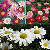 100 PYRETHRUM DAISY Seeds Natural Mosqui...