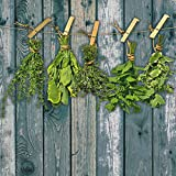 Artland Qualität I Glas Küchenrückwand ESG Spritzschutz Küche 60 x 60 cm Botanik Pflanzen Kräuter Foto Grün G4HN Kräuter mit Holzoptik