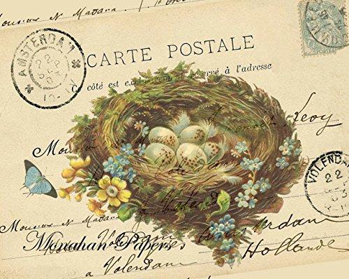 Papier Tischsets Ostern Abendessen Ostern Decor Ostereier Nest Pak 50Platzsets (Baby-dusche-papier-tischsets)