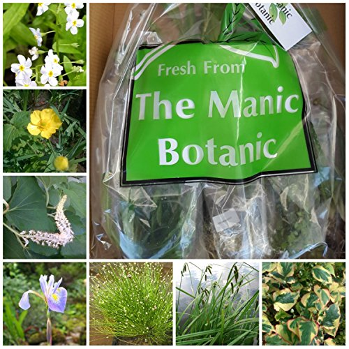 the-manic-botanic-pond-plant-mix-of-8-varieties-perfect-for-garden-wildlife-ponds-super-seasonal-sel