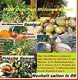 20x Mini Ch. F1 Drachen Melonen Melone Baum Samen Saatgut Garten Zimmer außen Pflanze Rarität Obst Obstsamen #164