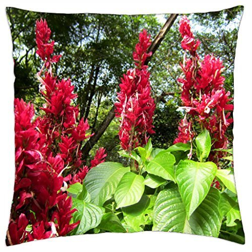 Aphelandra sinclairiana - Throw Pillow Cover Case (16