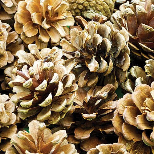 Baker Ross Pommes de pin Naturel 250 g