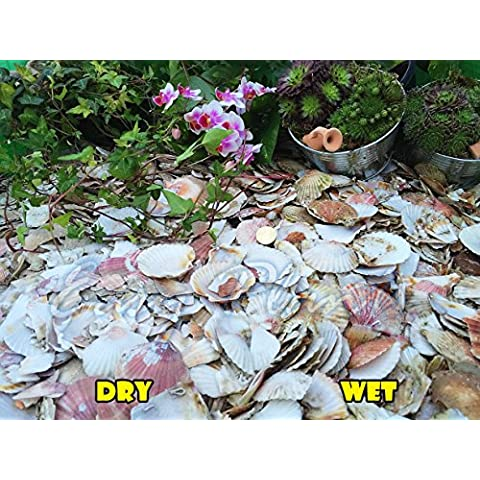 Virutas de grava piedra pizarra disuadir hierba jardín Patio Camino planta superior–Acolchado de concha marina, 10