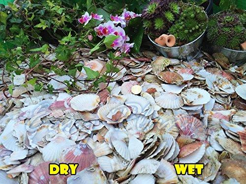 trucioli-di-ghiaia-pietra-di-ardesia-deter-erbacce-da-giardino-patio-percorso-plant-superficiale-sca