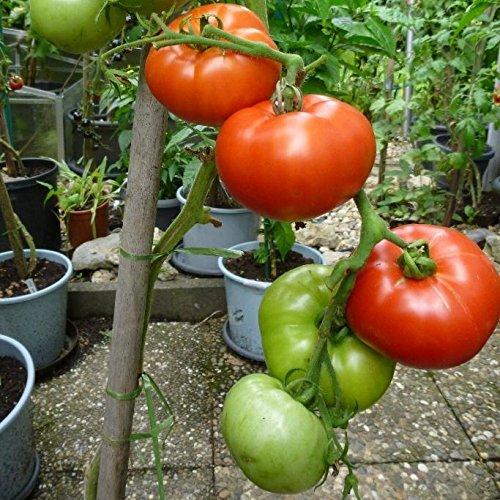 Tomate Gewicht