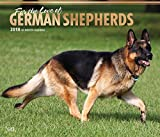 German Shepherds – For the love of - Deutsche Schäferhunde 2018-18-Monatskalender mit freier DogDays-App: Original BrownTrout-Kalender - Deluxe [Mehrsprachig] [Kalender] (Deluxe-Kalender)