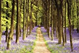 Photography Poster featuring woodland Path through the Trees 91.5x61cm