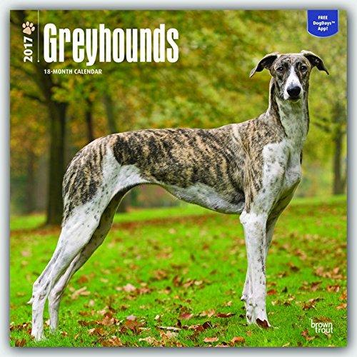 greyhounds-grosser-englischer-windhund-2017-18-monatskalender-mit-freier-dogdays-app-original-brownt