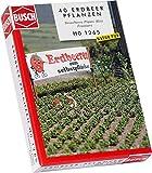 Busch 1265 - Erdbeerpflanzen