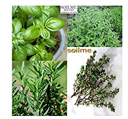 SOIL ME Packing of 4 Herb Seeds - Basil, Rosemary, Oregano and Thyme