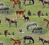 Fat Quarter Esel Esel Farm Tiere 100% Baumwolle Quilten