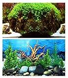 Aquarium Fotorückwand Beidseitig Rückwandfolie 200x50 cm