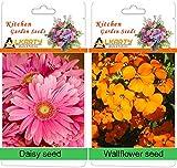 alkarty Daisy and wallflower winter flow...
