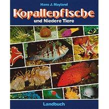 Korallenfische und Niedere Tiere