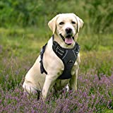 Rabbitgoo Adjustable Refletive Dog Harness No-Pull Outdoor Pet Vest with Handle Easy Control for Large Dogs & Durable Material Black