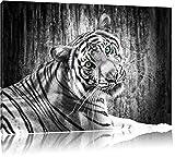 schöner neugieriger Tiger schwarz/weiß Format: 100x70 auf Leinwand, XXL riesige Bilder fertig gerahmt mit Keilrahmen, Kunstdruck auf Wandbild mit Rahmen, günstiger als Gemälde oder Ölbild, kein Poster oder Plakat