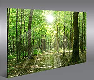 islandburner bild bilder auf leinwand sonnenstrahlen im wald b ume spaziergang 1p xxl. Black Bedroom Furniture Sets. Home Design Ideas