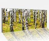 Acrylglasbild 100x40cm Birke Birkenwald Baum Bäume Stamm Wald Landschaft Acrylbild Acryl Druck Acrylglas Acrylglasbilder 14A9720, Acrylglas Größe1:100cmx40cm