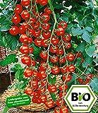 BALDUR-Garten BIO-Cherrytomate 'Pepe' F1, 2 Pflanzen BIO-Tomatenpflanze