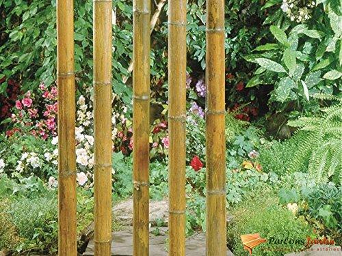 Tige de bambou naturel laquée Ø40-50mm H270cm