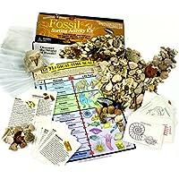 Dancing Bear Colección de fósiles Clasificación Actividad Kit con más de 100 Piezas