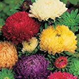 #4: Flower Seeds : Aster- Ducess Formula Mixed Flower Seeds For Winter Season - Garden Flower Seeds Pack by Creative Farmer