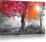 Zauberhafte Waldlandschaft schwarz/weiß Format: 100x70 cm auf Leinwand, XXL riesige Bilder fertig gerahmt mit Keilrahmen, Kunstdruck auf Wandbild mit Rahmen, günstiger als Gemälde oder Ölbild, kein Poster oder Plakat