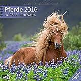 Pferde 30 x 30 cm 2016
