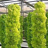 200 nahrhafte Salatsamen DIY Hausgarten Gemüsesamen Große schnell wachsenden