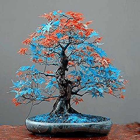 Classical 10 diversi colori giapponesi semi di acero mini semi bonsai bonsai semina i semi dell'albero di acero casa giardino bonsai 10 PCS