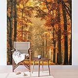 Bilderwelten Vliestapete Premium - Märchenwald im Herbst - Fototapete Quadrat Vlies Tapete Wandtapete Wandbild Foto, Größe HxB: 240cm x 240cm