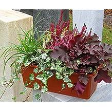 mehrjähriges, winterhartes Balkonpflanzen-Set für Balkonkästen 40.50 cm lang