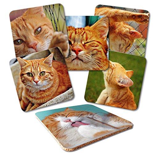 ADDIES Glas-Untersetzer 6-TLG.Set Bedruckt Katzen-Motive in hochwertiger Klarsicht-Geschenkbox und Korkrückseite, Tier-Motiv