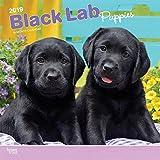 Black Labrador Puppies - Schwarze Labradorwelpen 2019 - 18-Monatskalender mit freier DogDays-App (Wall-Kalender)