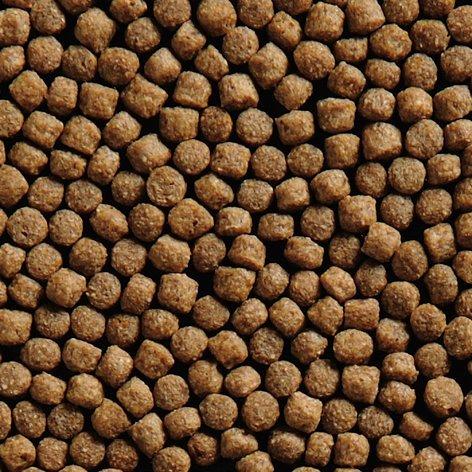 Coppens International bv Koi Wheat Germ 3 mm, Menge:2.5 Liter Eimer
