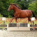 Brown Pferd galoppiert in Mohnfeld Tiertapete-Natur-Foto-Tapete in 8 Größen erhältlich Extraklein digital