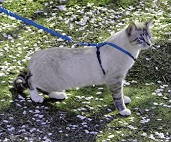 PetSafe Harnais pour chat et laisse Easy Walk, Grand - Bleu