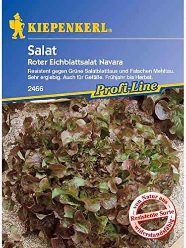 Eichblattsalat Im Gemüsegarten, zum Frischverzehr und im Salat geeignet
