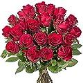 23 rote Rosen von Valentins auf Du und dein Garten
