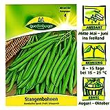 Quedlinburger Stangenbohnen Früh Sorte Mombacher Speck Phaseolus vulgaris Ertragreich / Ernte August bis Oktober / Bohnensaatgut