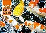 Koi: Juwelen im Teich (Wandkalender 2019 DIN A2 quer): Kois: Schöne Statussymbole (Monatskalender, 14 Seiten ) (CALVENDO Tiere)