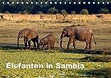 Elefanten in Sambia (Tischkalender 2019 DIN A5 quer): Die Elefanten im South Luangwa National Park können aus nächster Nähe beobachtet und ... (Monatskalender, 14 Seiten ) (CALVENDO Tiere) - Johanna Krause